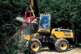 Bioenergia da Biomassa