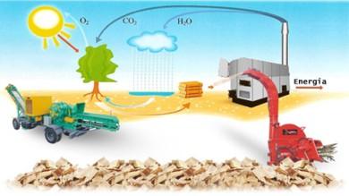 Processamento de Biomassa