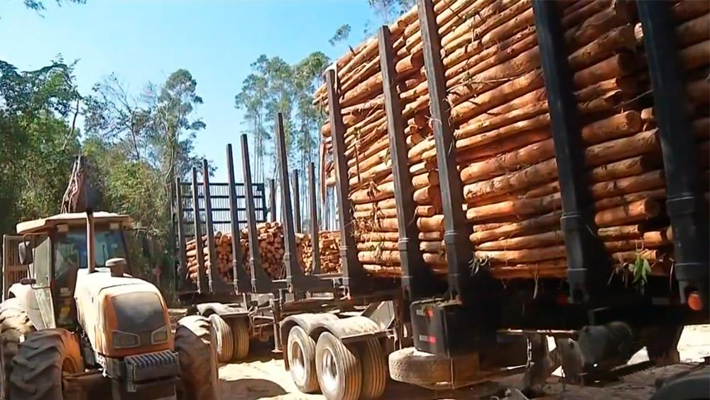 Increased investment in bioenergy in the Brazilian market generates savings in industrial sectors
