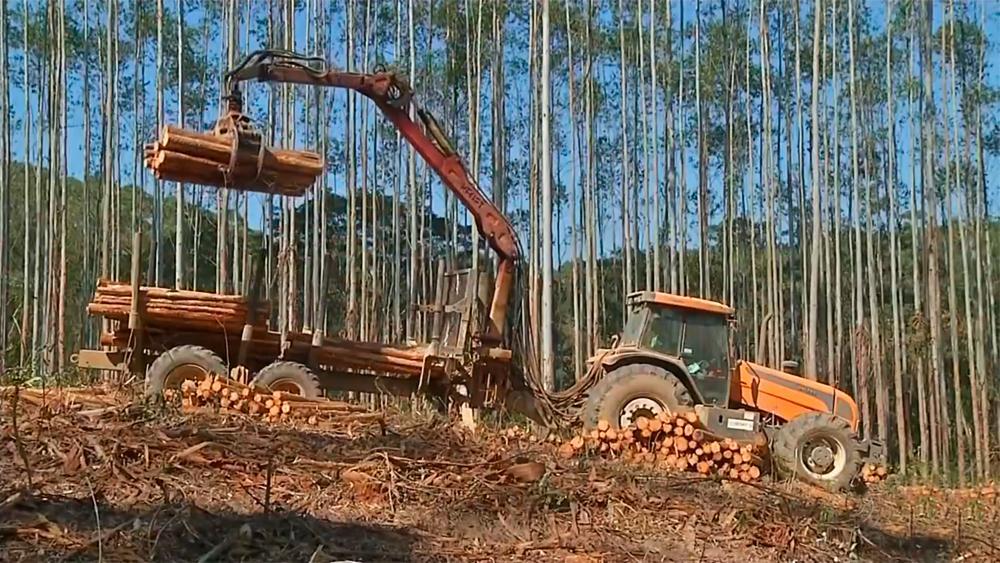 Aumento de investimento em bioenergia no marcado brasileiro gera economia em setores industriais
