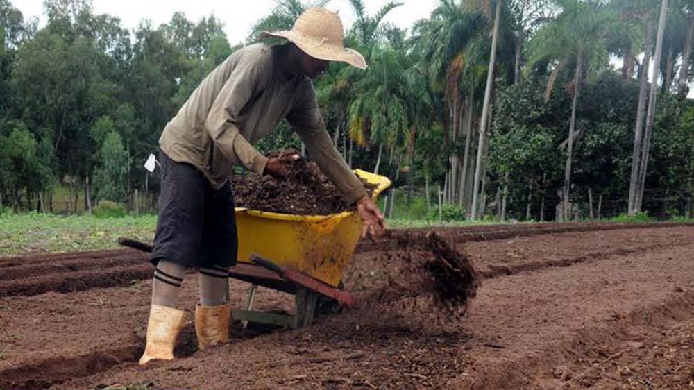 Benefícios do uso da compostagem na agricultura
