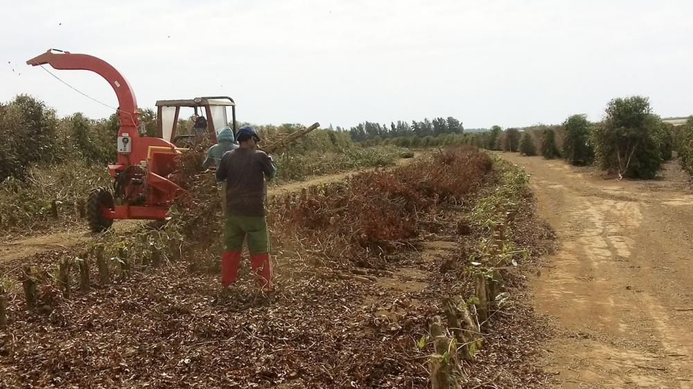 Lippel Forestry Chipper being used on coffee farm organic matter reutilization