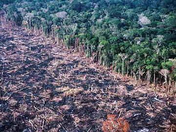 Mais de 70% do desmatamento amazônico vira lixo