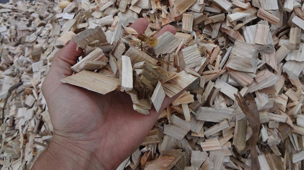 Chips de eucalipto