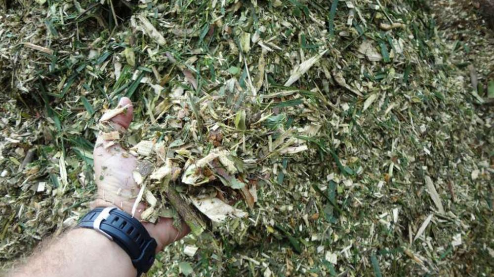 Biomassa triturada; pronta para compostagem