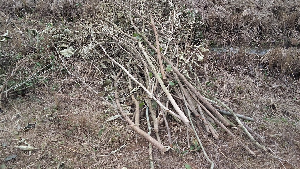 Branches to be Crushed