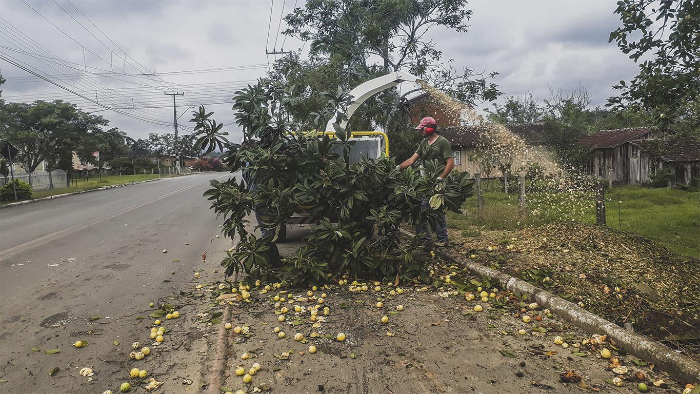 Capacidad para las ramas enteras