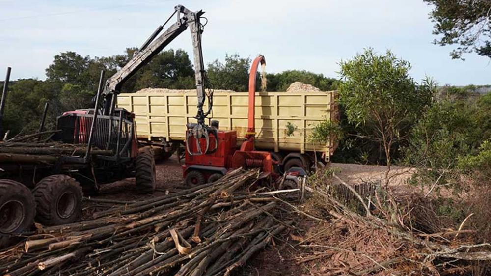 chipeando troncos de 6 metros