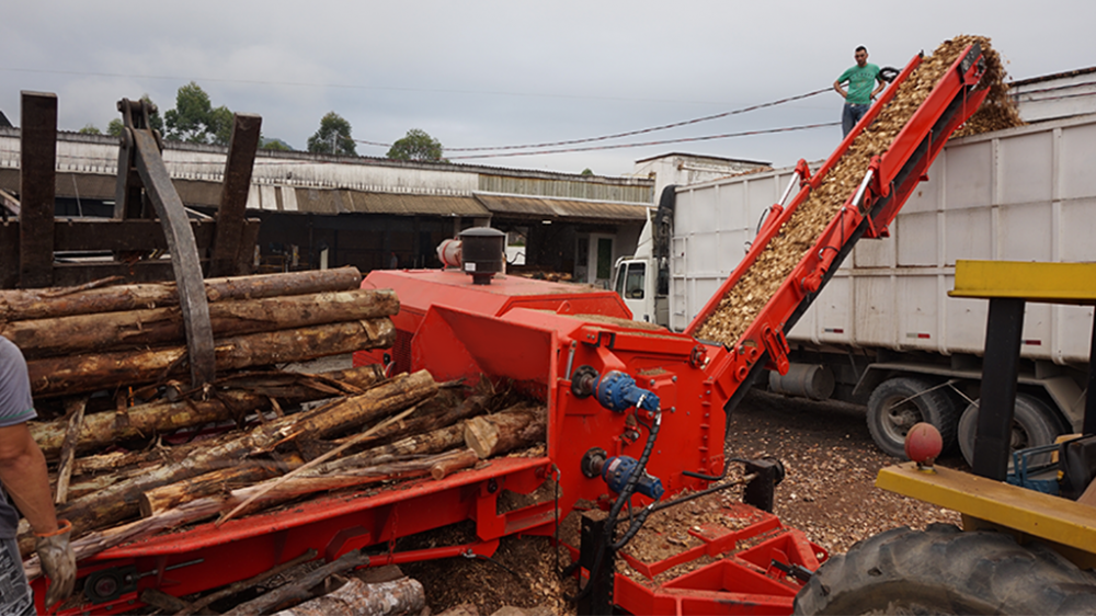 Chipping eucalyptus wood logs