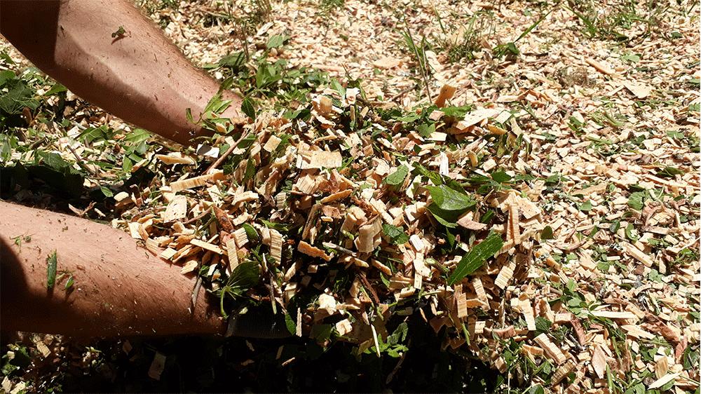Chips de madera