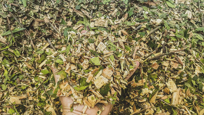Chips de madera producidos por el PTU 300