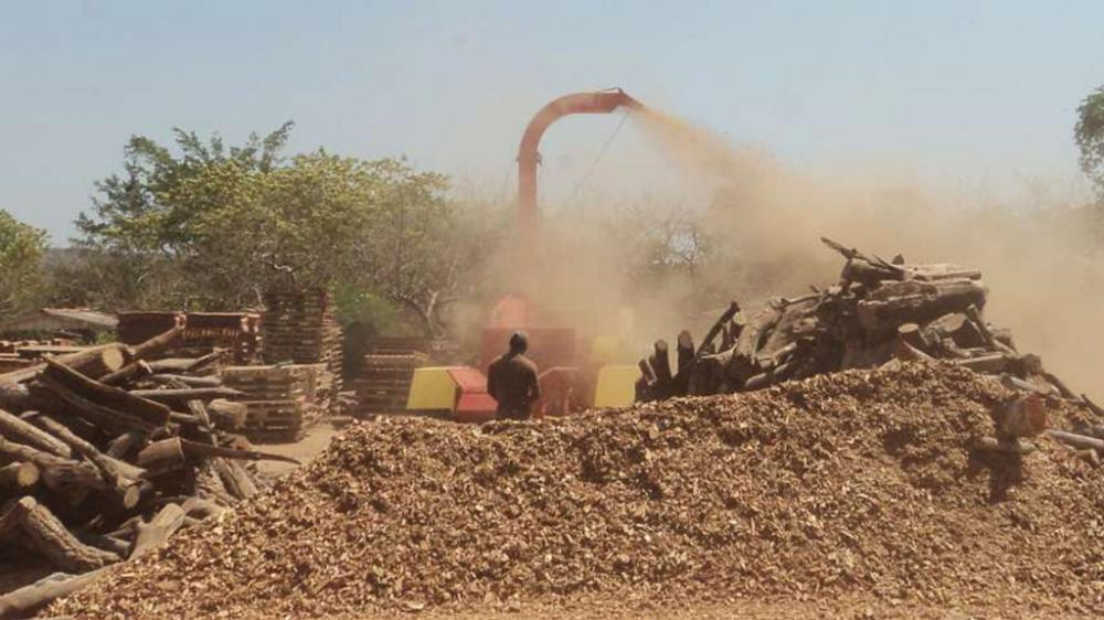 Jacaré 700 wood chipper in action poking hardwoods and dry