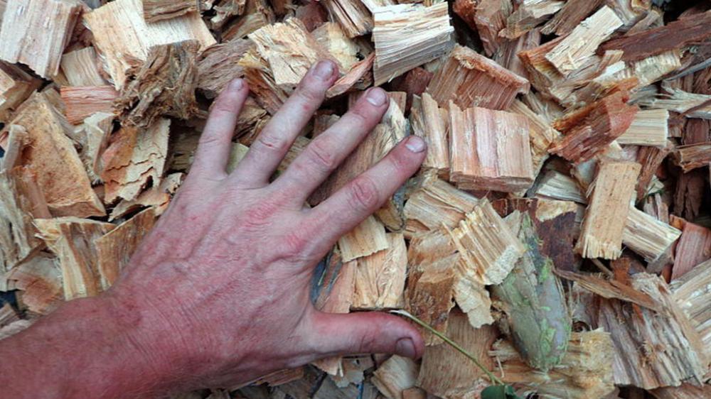 La producción de astillas de madera de eucalipto de gran tamaño