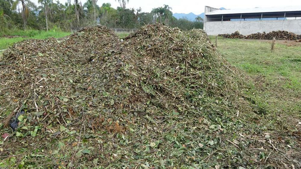 Matéria orgânica triturada, pronta para ser usada como compostagem