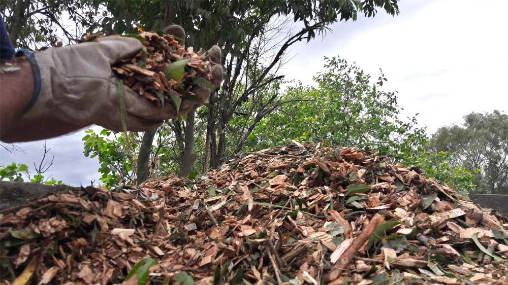 Material triturado se torna um rico composto orgânico para o solo ou aplicações energéticas