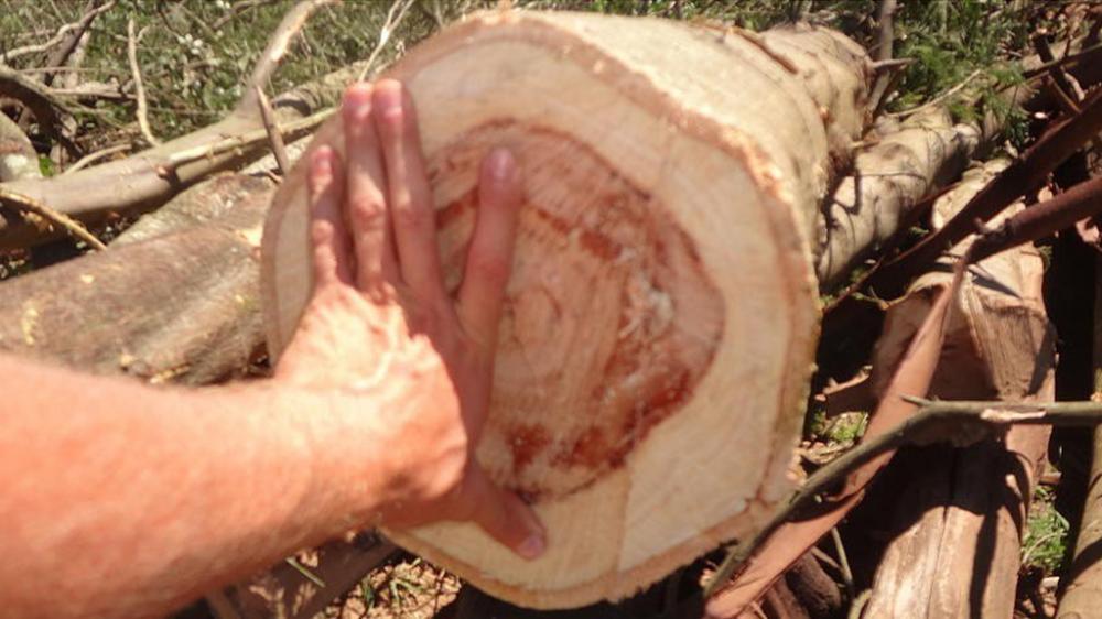 Pica madeira dura de 320mm de diâmetro
