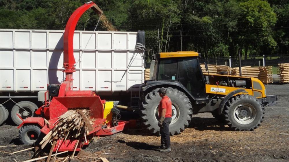 Picando madeira