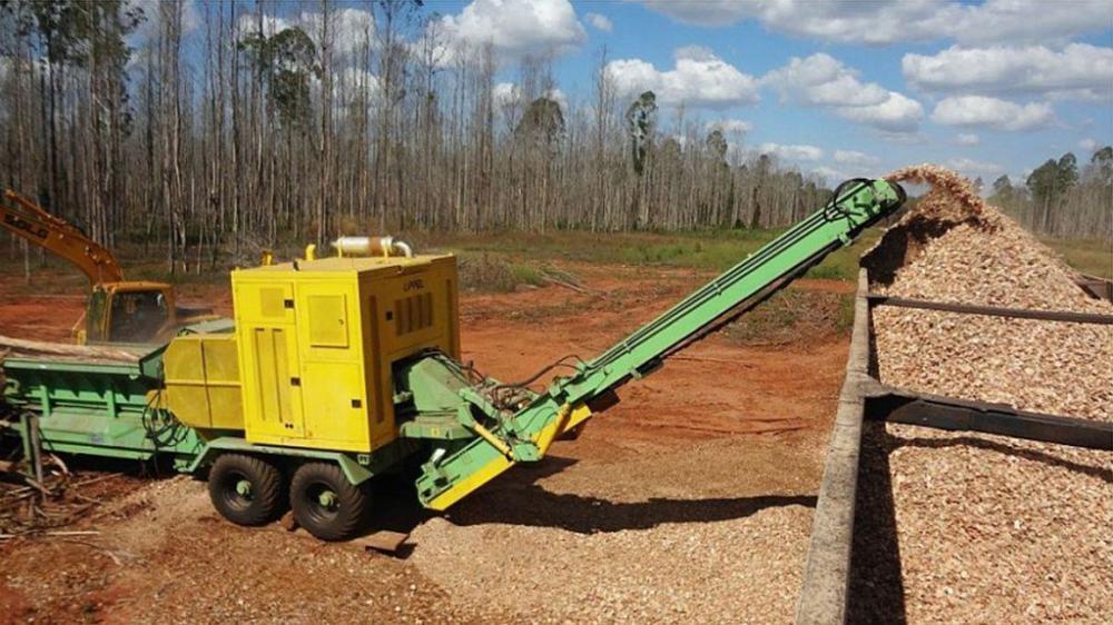PTML 350/550 x 800 triturando árvores de eucalipto