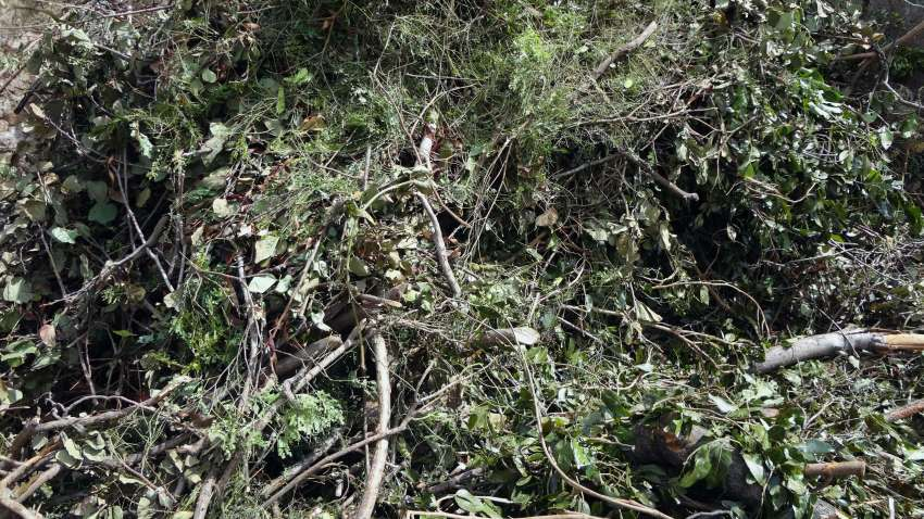 Raw material - branches, bushes and leaves urban prunings