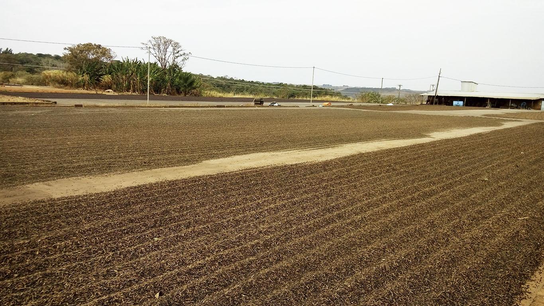 Reutilização da matéria orgânica para revitalização do solo