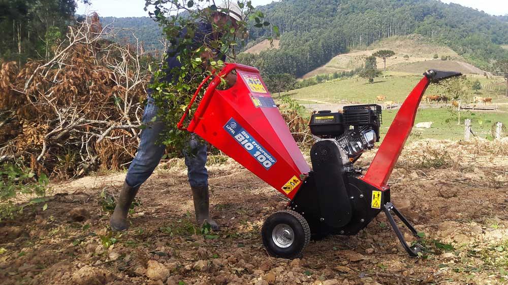 Triturando ramos de araçá.
